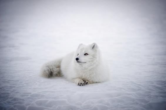 iceland-2126989_1280
